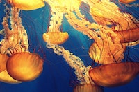Aquarium of the Pacific Webcams