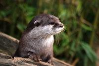 Seattle Aquarium Sea Otter Cam