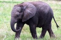 Tembe Elephant Park: Emangusi, South Africa